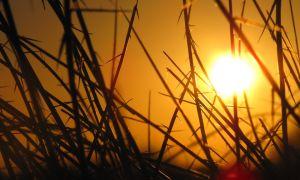 Травы в помощь для очищения организма