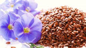 как выглядят семена льна фото