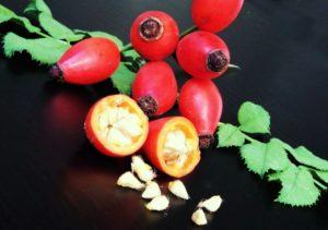 фото шиповник ягоды
