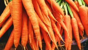 фото моркви