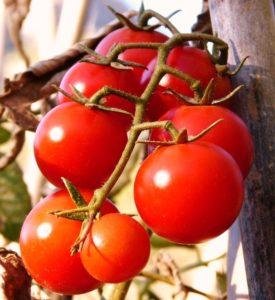помидоры свежие фото