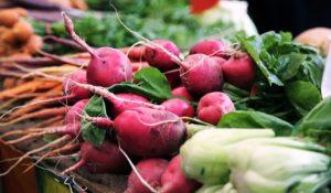 корнеплод редис фото