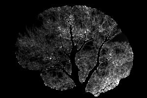 очищение мозга