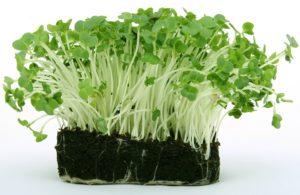 кресс из семян